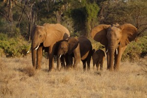 Malindi-National-Reserve-Elephants