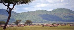 Serengeti 6