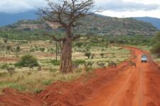 african-savanah-kenya