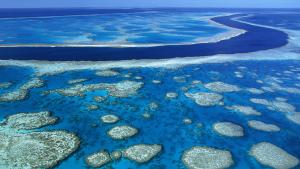 marea-bariera-de-corali-in-pragul-unui-dezastru-ecologic