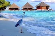 Maldive-Islands_8Q7HF_8Q7MH